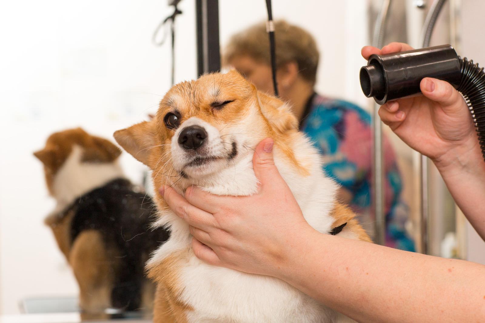 Le 3 fasi della toelettatura del cane: dal cucciolo al cane anziano