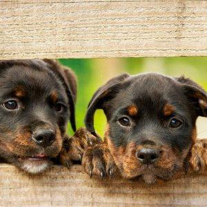 Animali in condominio: scopri come fare abbaiare meno il tuo cane